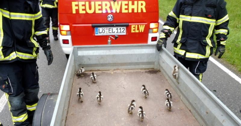 Feuerwehr, Schopfheim, Gänse, © Polizeipräsidium Freiburg
