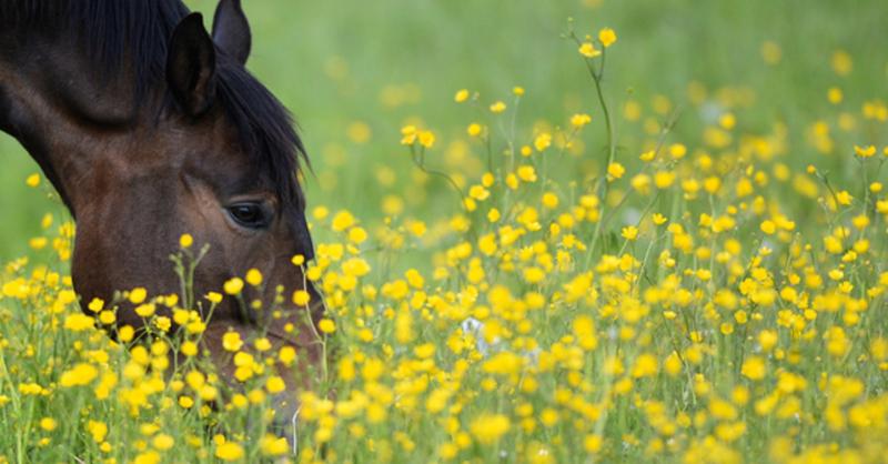 Pferd, Weide, Wiese, © Felix Kästle - dpa