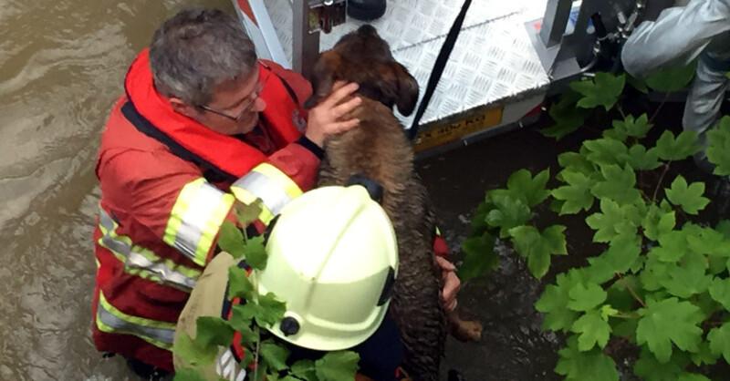 Hund, Rettung, Hochwasser, Binningen, © Kantonspolizei Basel-Landschaft