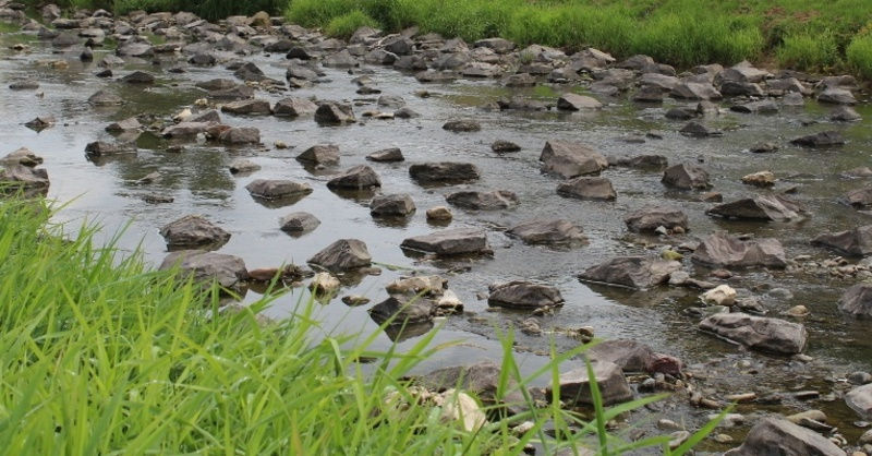 Niedrigwasser, Elz, Fluss, © Landratsamt Emmendingen