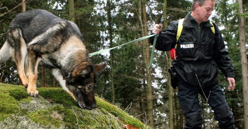Hundestaffel, Polizei, Suchhunde, Vermisstensuche, © Uli Deck - dpa