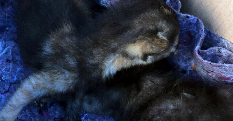 Katze, Extrol, © baden.fm