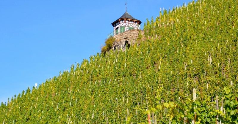 Winzer, Weinbau, Reben, © Pixabay