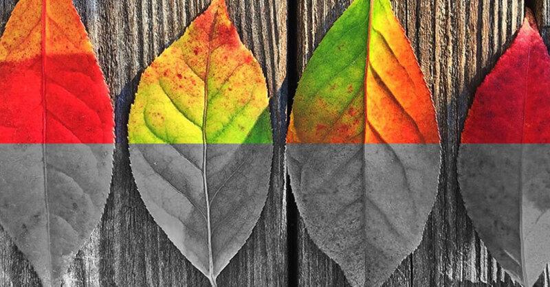 Farbenblind, Sehstörung, rot grün schwäche, © Pixabay