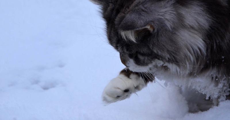 Katze, Schnee, Pfoten, © Pixabay
