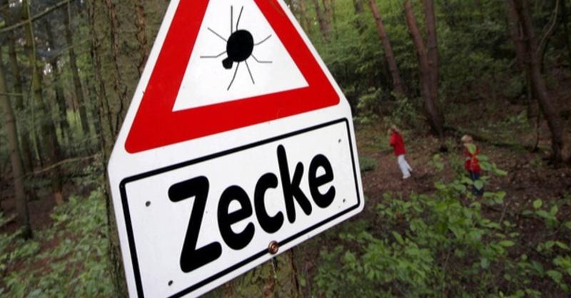 Zecke, Wald, Schild, © Frank Rumpenhorst - dpa