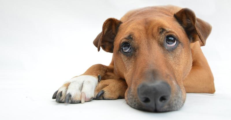 Hund, Tier, © Pixabay (Symbolbild)