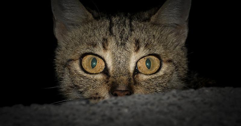 Katze, Kater, Katzenaugen, © Pixabay (Symbolbild)
