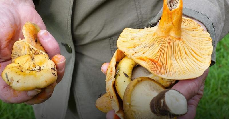 Pilze, Pilzsammler, Wald, © Pixabay (Symbolbild)