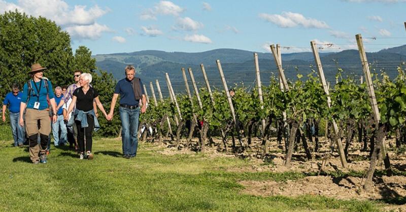 Reben, Wanderung, Wein, Bad Krozingen, Weinwanderung, © Veranstalter