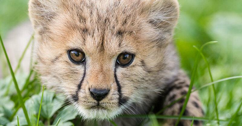 © Zoo Basel