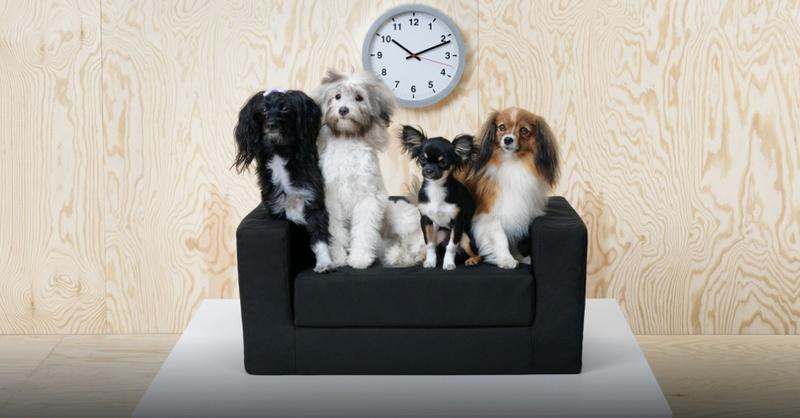 Ikea, Hunde, Tiermöbel, Möbel, © Marcus Hansen - Ikea