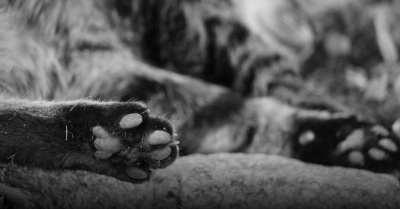 Katze, Pfote, Fell, © Pixabay (Symbolbild)