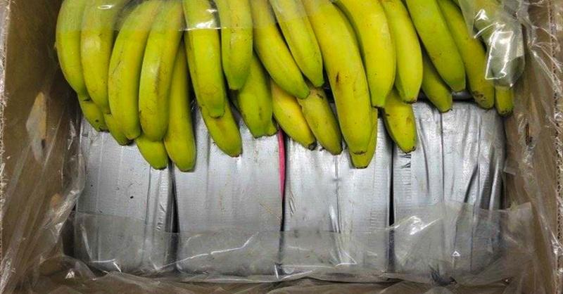 Kilogramm Kokain in Bananenschachteln in Deutschland entdeckt