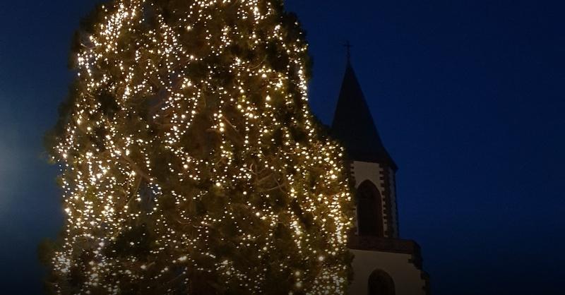 Größter Tannenbaum Deutschlands.In Rheinfelden Steht Ab Sofort Deutschlands Größter Freistehender