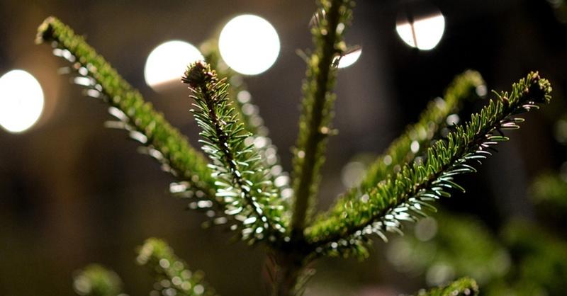 Weihnachten, Tanne, Weihnachtsbaum, © Patrick Seeger - dpa (Symbolbild)