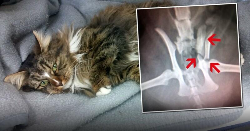Katze, Röntgen, Becken, Bruch, © Tierschutzverein Hochschwarzwald