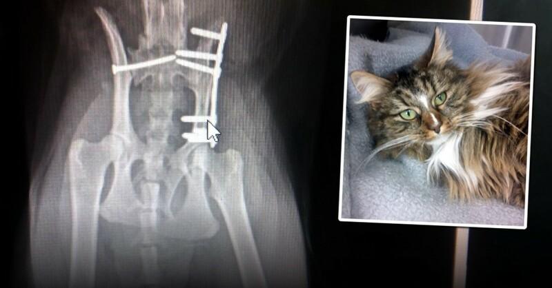Katze, Mauz, Röntgen, Operation, © Tierschutzverein Hochschwarzwald
