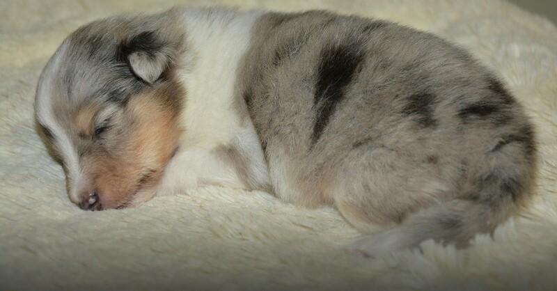 Welpe, Hund, Tier, © Pixabay (Symbolbild)