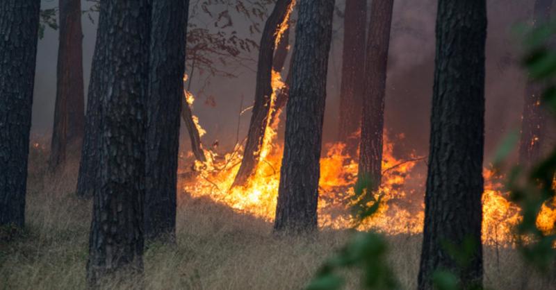 Feuer, Flammen, Waldbrand, © Friedrich Bungert - dpa (Symbolbild)