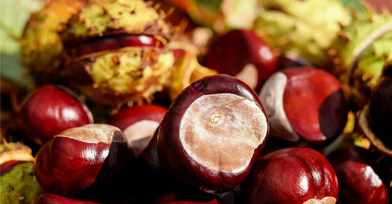 Rosskastanien, Herbst, © Pixabay (Symbolbild)