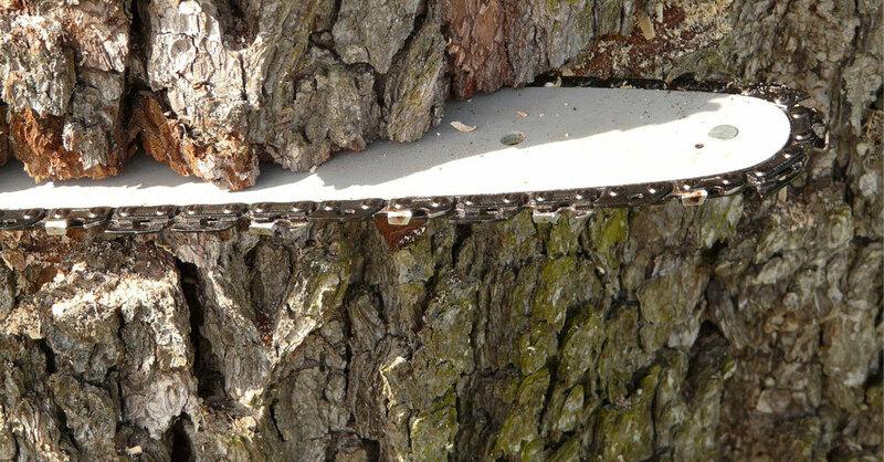 Kettensäge, Baum fällen, Forstarbeiten, Wald, © Pixabay (Symbolbild)