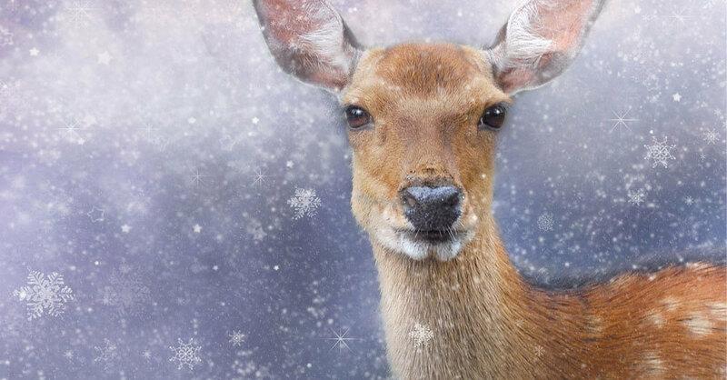 Reh, Winter, Schnee, Weihnachten, © Pixabay (Symbolbild)