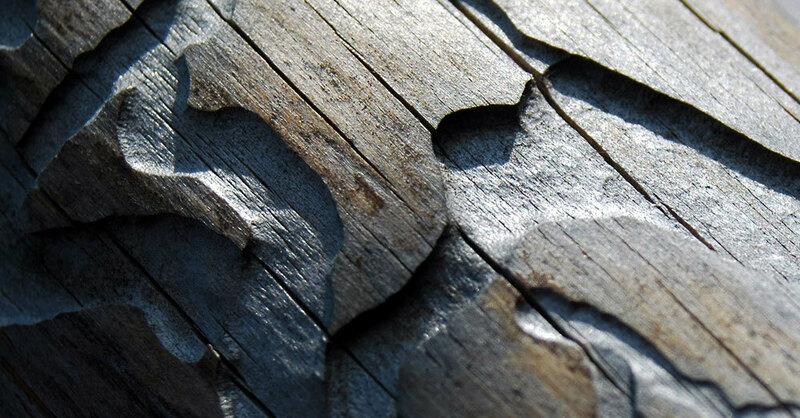 Borkenkäfer, Schädling, Wald, Holz, Forst, © Pixabay (Symbolbild)