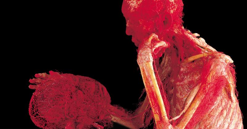 Körperwelten , © Gunther von Hagens' KÖRPERWELTEN