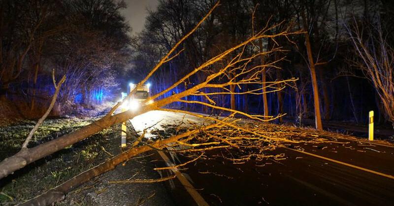 Orkan, Sturm, Baum, Äste, © Sven Kohls - dpa