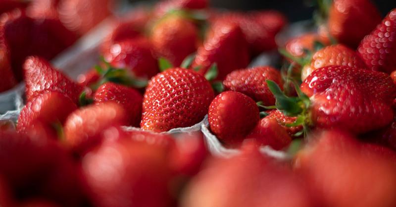 Erdbeeren, Schale, Landwirtschaft, Obstbauern, © Patrick Seeger - dpa