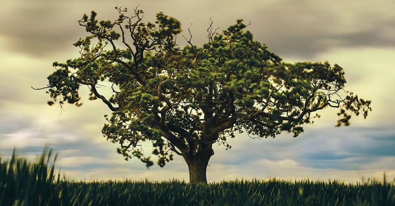 Symbolbild: Zoltan Tasi/unsplash, © Symbolbild: Zoltan Tasi/unsplash