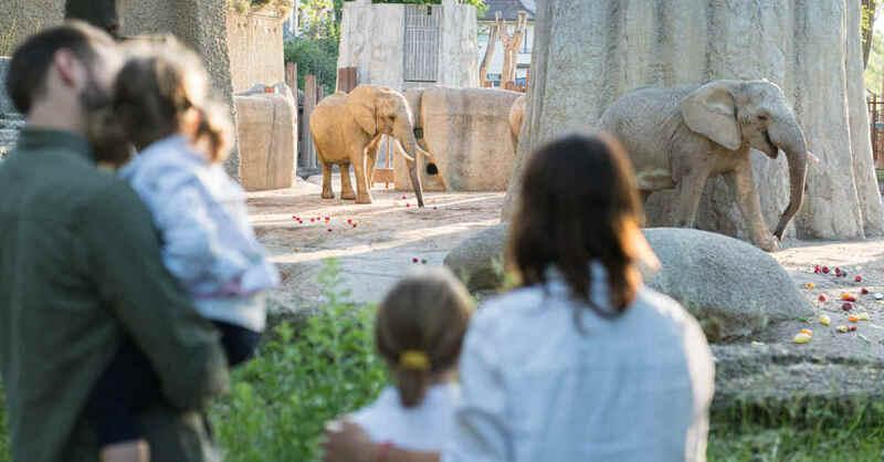 Zoo Basel, Zolli, Elefant, Tierpark, © Zoo Basel (Archivbild)