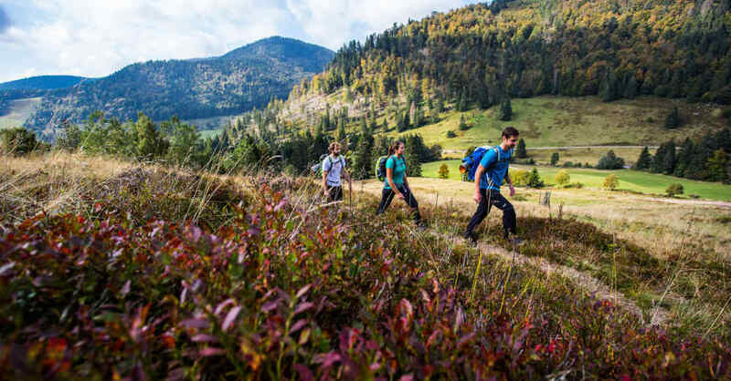 Wandern, Wanderer, Wanderweg, Hochschwarzwald, Menzenschwand, Natur, Freizeit, © Hochschwarzwald Tourismus GmbH (Archivbild)