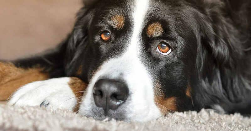 Hunde, Haustiere, Tierheim, © Pixabay (Symbolbild)