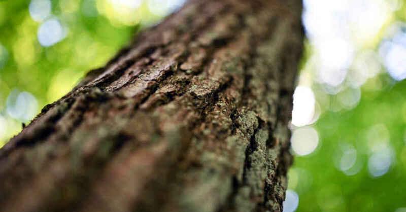 Baum, Rinde, Wald, Natur, Borkenkäfer, © Uli Deck - dpa (Symbolbild)