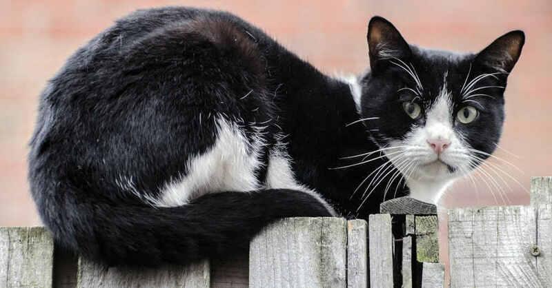 Katze, Haustier, Zaun, Kater, © Pixabay (Symbolbild)