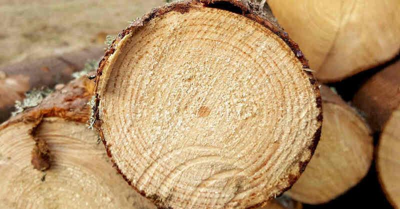Holz, Baumstamm, Wald, Forst, Forstarbeiten, Sägewerk, © Pixabay (Symbolbild)
