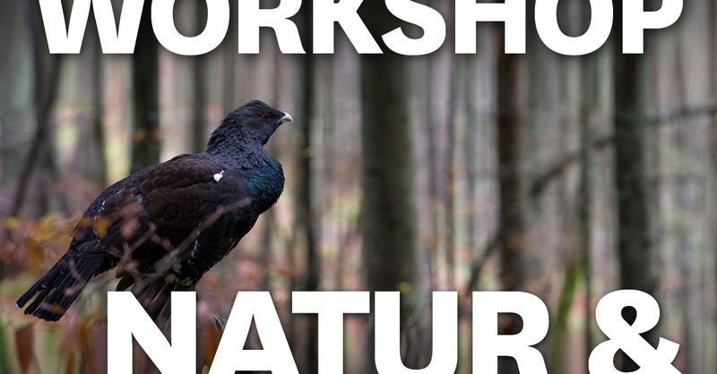 MUNDOLOGIA-Workshop: Natur- und Tierfotografie, © © Veranstalter
