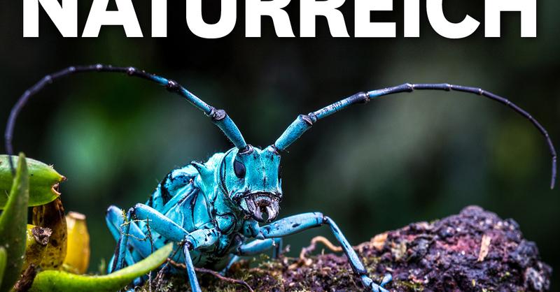 MUNDOLOGIA: Naturreich - Faszination Natur, © © Veranstalter