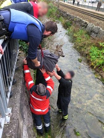 Rettung, Reh, © Kantonspolizei Basel-Landschaft