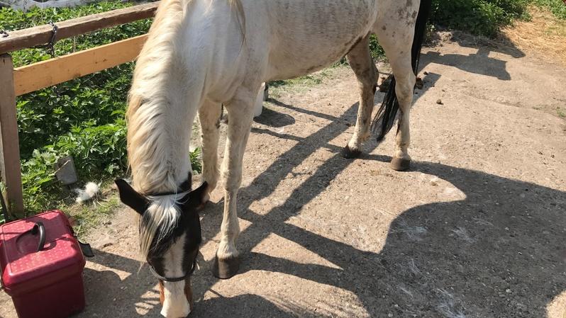 Pferdeschänder, Pferd, Verletzungen, © baden.fm