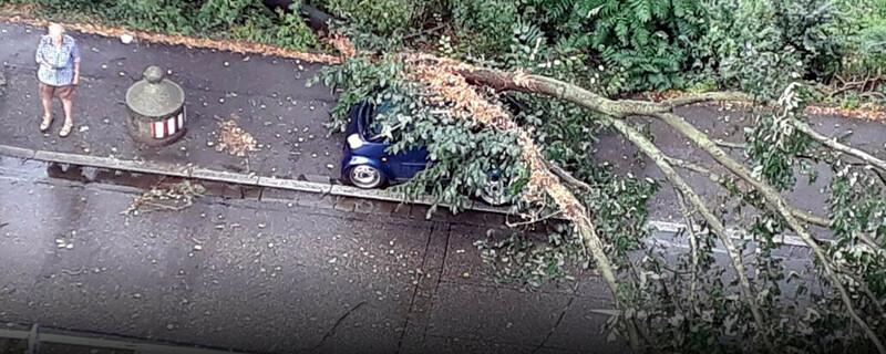 Unwetter, Baum, © baden.fm (Hörerfoto)