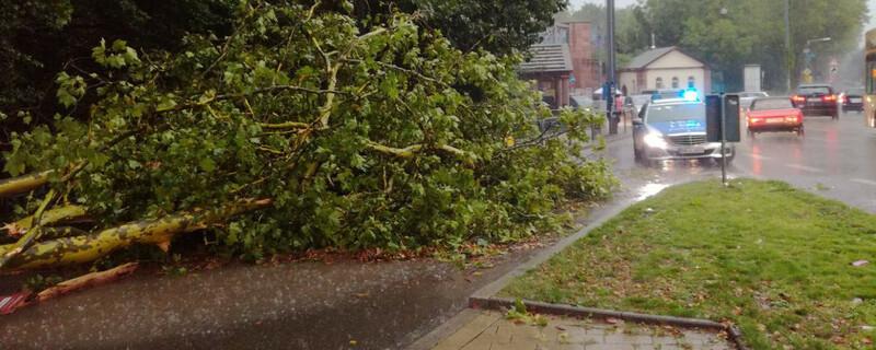 Unwetter, Baum, © baden.fm